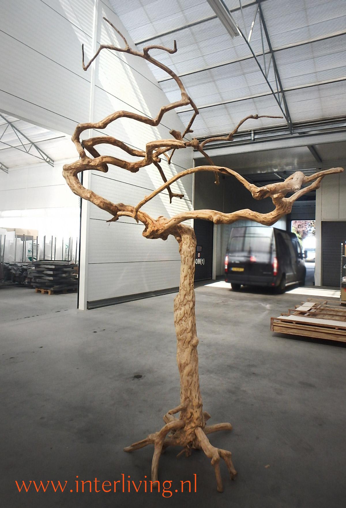 blanke kale boom met grillige takken - woondecoratie - oud vergrijsd hout - old tree